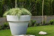Фото 2 Катальпа: полезные свойства и как с ее помощью преобразить свой сад до неузнаваемости?
