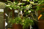Фото 31 Катальпа: полезные свойства и как с ее помощью преобразить свой сад до неузнаваемости?