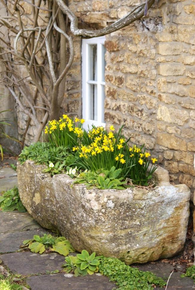Желтые цветы помогут избавиться от депрессии