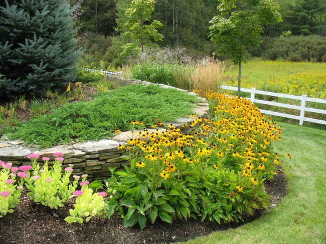 Желтые цветы придадут яркости вашему ландшафту