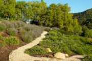 Фото 15 Казацкий можжевельник: популярные сорта и все тонкости посадки, ухода, лечения