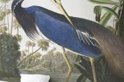Фото 27 Анималистические принты и птицы на стенах: 70+ навеянных самой природой идей для интерьера