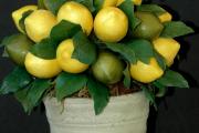 Фото 28 Топиарий из фруктов: мастер-класс по созданию аппетитного шедевра своими руками