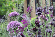 Фото 14 Аквилегия в садовом дизайне: посадка, уход и выращивание многолетника
