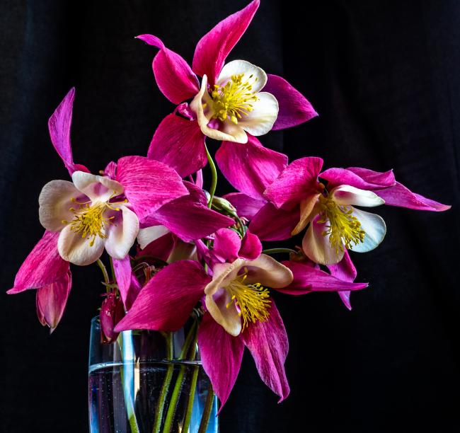 Эти цветы украсят не только ваш двор, но и будут эффектно выглядеть в вазоне дополняя интерьер вашего дома