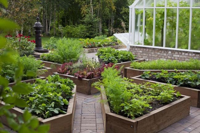 Современный огород своими руками
