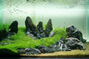 Фото 20 Оформление аквариума своими руками: акваскейпинг от азов к продуманной экосистеме