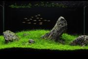 Оформление аквариума своими руками [Идеи и советы]: http://happymodern.ru/kak-oformit-akvarium-svoimi-rukami-51-foto-sozdaem-podvodnoe-chudo/