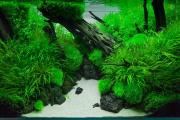 Фото 30 Оформление аквариума своими руками: акваскейпинг от азов к продуманной экосистеме