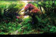 Фото 6 Оформление аквариума своими руками: акваскейпинг от азов к продуманной экосистеме