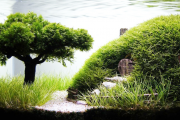 Фото 7 Оформление аквариума своими руками: акваскейпинг от азов к продуманной экосистеме