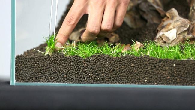 Посадка низкорослых водорослей