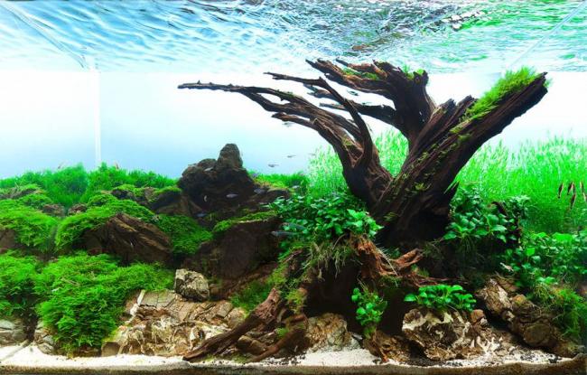 Коренья часто используются для оформления домашнего подводного мира
