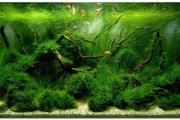 Фото 10 Оформление аквариума своими руками: акваскейпинг от азов к продуманной экосистеме