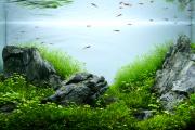 Фото 3 Оформление аквариума своими руками: акваскейпинг от азов к продуманной экосистеме