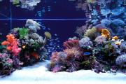 Фото 13 Оформление аквариума своими руками: акваскейпинг от азов к продуманной экосистеме