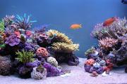 Фото 15 Оформление аквариума своими руками: акваскейпинг от азов к продуманной экосистеме
