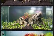Фото 16 Оформление аквариума своими руками: акваскейпинг от азов к продуманной экосистеме