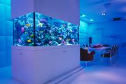 Фото 17 Оформление аквариума своими руками: акваскейпинг от азов к продуманной экосистеме