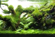 Фото 22 Оформление аквариума своими руками: акваскейпинг от азов к продуманной экосистеме
