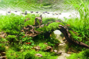 Фото 24 Оформление аквариума своими руками: акваскейпинг от азов к продуманной экосистеме