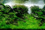 Фото 25 Оформление аквариума своими руками: акваскейпинг от азов к продуманной экосистеме