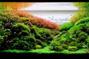 Фото 27 Оформление аквариума своими руками: акваскейпинг от азов к продуманной экосистеме