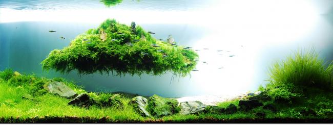 Летающий остров сделает ваш аквариум просто неотразимым