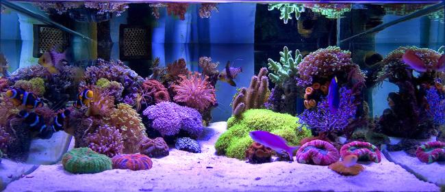 Подсветка в дизайне аквариума играет очень важную роль