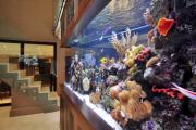 Фото 11 Оформление аквариума своими руками: акваскейпинг от азов к продуманной экосистеме