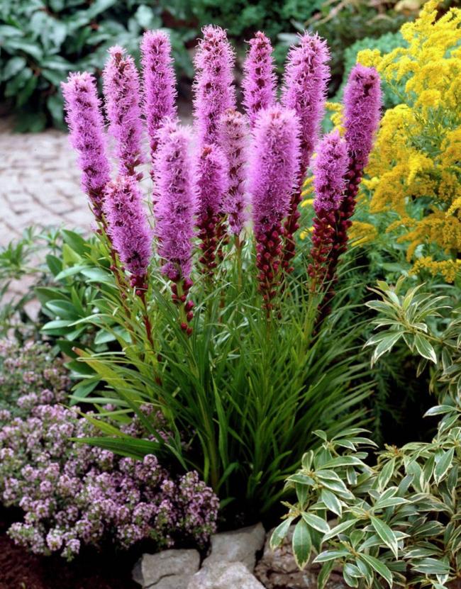 Эти цветы красиво сочетаются с другими яркими растениями