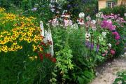 Фото 20 Цветущие свечи для вашего сада: сорта лиатриса и тонкости ухода за многолетником