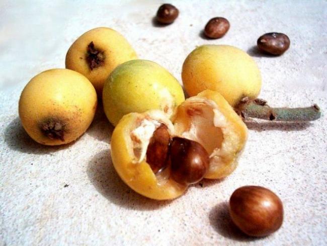 Из семян в последствии можно даже варить кофе