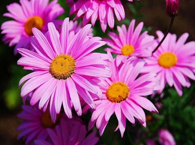 Мелкие белые цветы украсят ваш участок