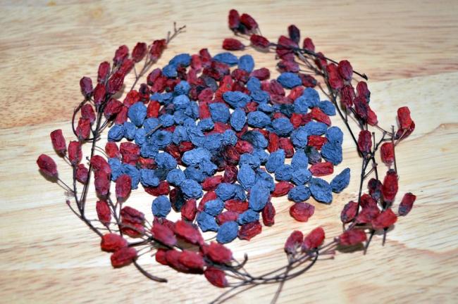 Размножение семенами происходит либо сразу после сбора, либо весной – после стратификации в течение трех месяцев при температуре около +5°С