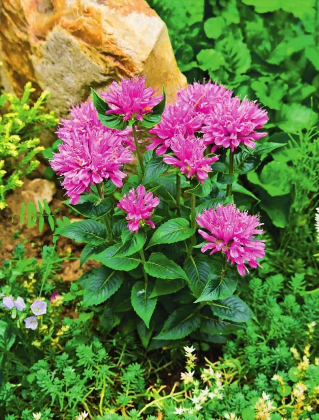 Малорослые растения, часто используемые в кулинарии