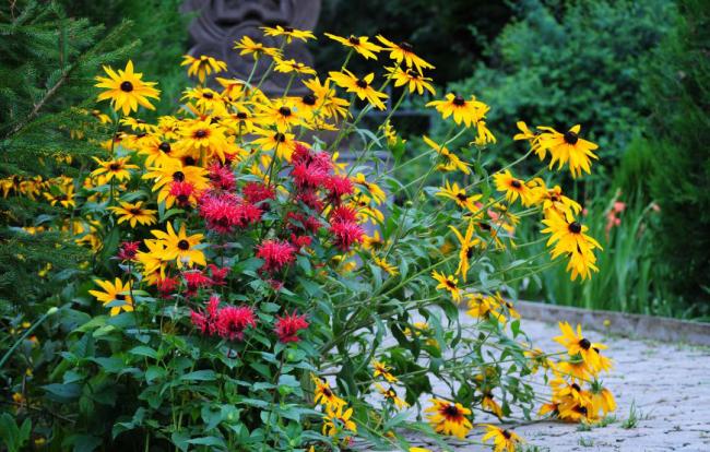 Композиция на клумбе из ярких цветов