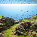 Оформление аквариума своими руками: акваскейпинг от азов к продуманной экосистеме фото