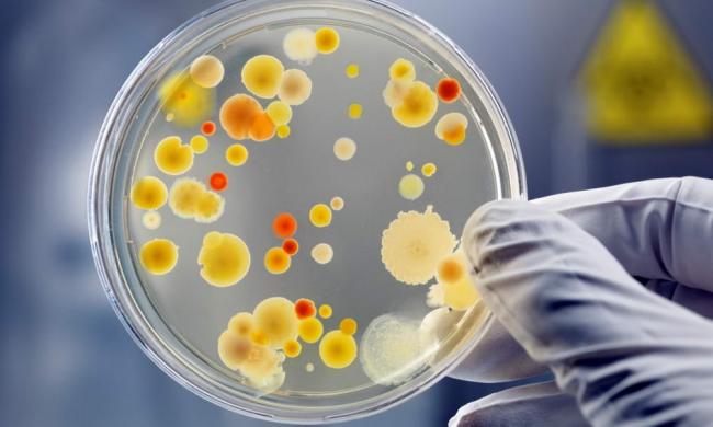 Выявление концентрации биологических объектов в пробе