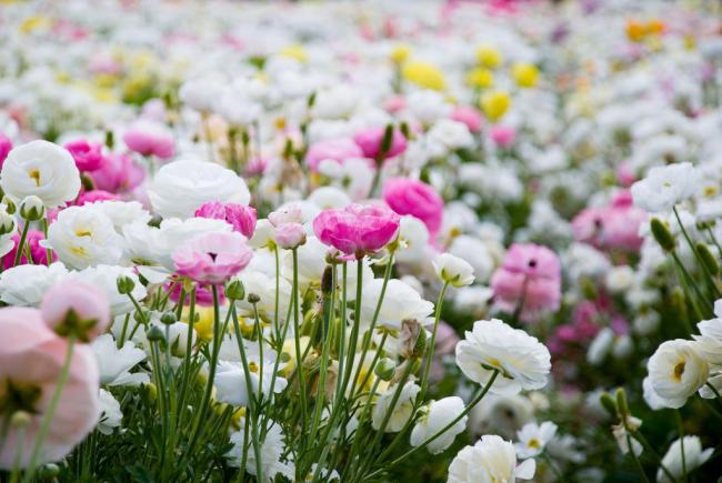 Солнечное и маловетренное место станет идеальным для высадки растения