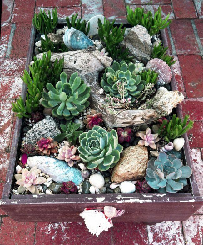 Для создания миниатюрного альпинария вам понадобятся всего лишь карликовые растения, галька и терракотовый горшок
