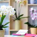 Как ухаживать за орхидеей в домашних условиях: хитрости для регулярного цветения и советы по уходу сразу после покупки фото