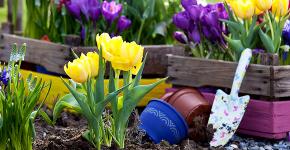 Весенние первоцветы (фото с названиями): разбудите ваш дачный участок! фото