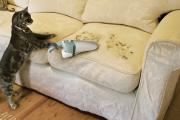 Фото 5 Чистый дом без хлопот: как быстро почистить диван от грязи, пятен и запаха в домашних условиях?