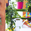 Фикусы (60+ фото видов с названиями): уход в домашних условиях — советы опытных цветоводов фото