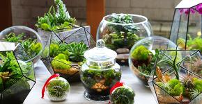 Флорариум своими руками: пошаговый мастер-класс по созданию потрясающего мини-сада за стеклом фото