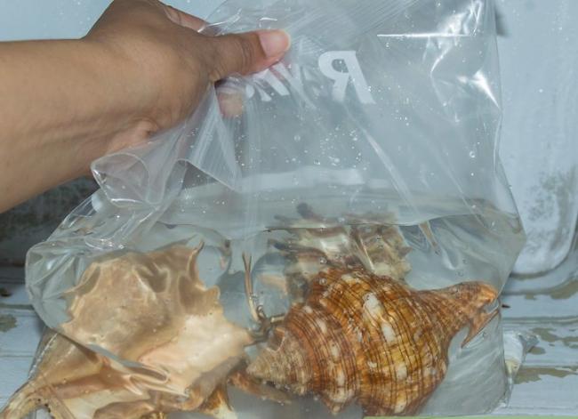Один из способов - залить моллюски водой и поместить в морозилку
