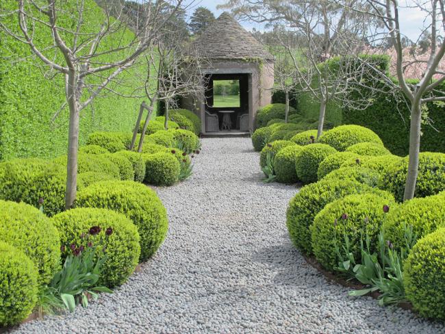 Идеальный кустарник для создания живых изгородей и бордюров, а так же оформления садовых дорожек и цветников