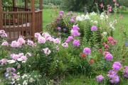 Фото 13 Шиловидный флокс (60+ фото в ландшафтном дизайне): описание сортов, посадка, уход, выращивание и размножение