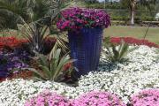 Фото 15 Шиловидный флокс: популярные сорта, особенности ухода и варианты размножения